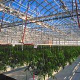 Rooftop greenhouse feeds Montrealfamilies