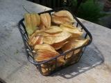 Discover sweet-tart physalis