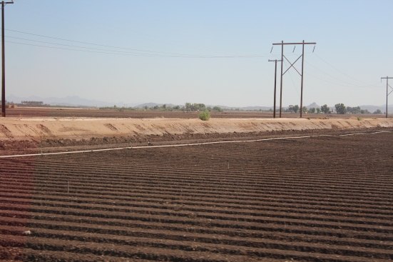 Vegetable fields ready for planting