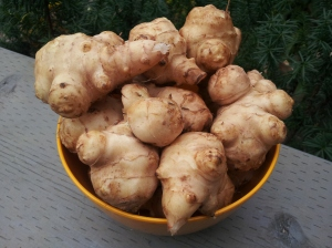 home-grown Jerusalem artichokes