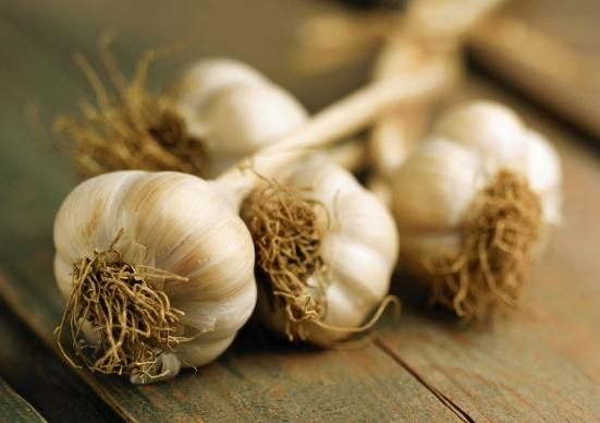 Ontario garlic