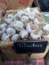 Garlic goes local