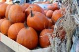 Pumpkin's last hurrah