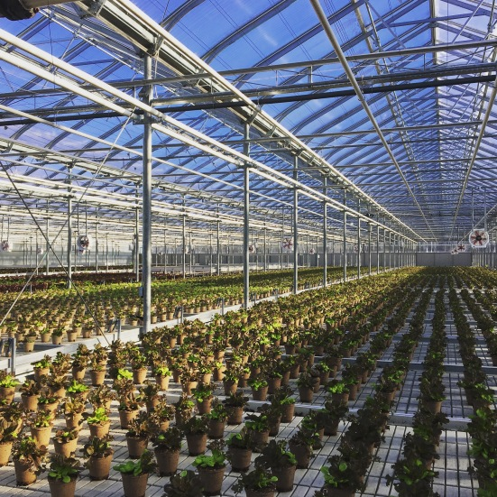 Greenbelt Microgreens organic lettuce