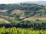 Umbria unleashed